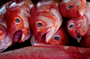 Dar Es Salaam Fish Market - Tanzania